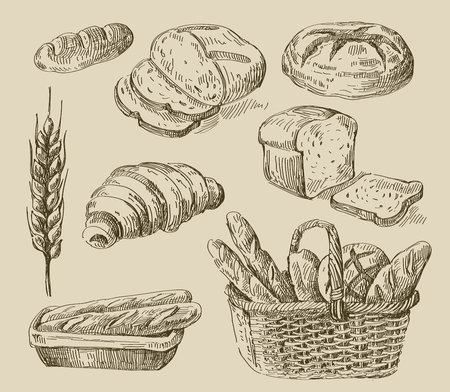 bread roll: vector hand drawn food sketch and bread doodle Illustration