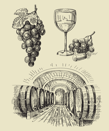 grapes on vine: vector hand drawn barrels sketch and vineyard doodle