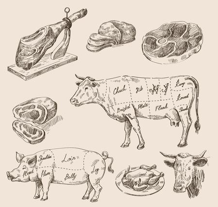 jamon: boceto dibujado alimentos vector de la mano y la cocina del doodle Vectores
