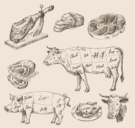 pork meat: vector hand drawn food sketch and kitchen doodle