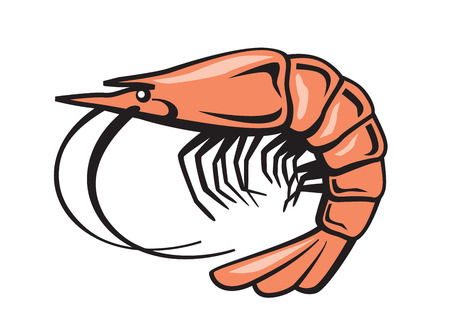 prawn: vector color prawn icon on white background Illustration