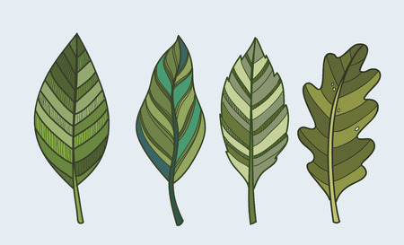venation: vector green Leaf nature icon on white background