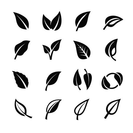 白い背景に黒い葉自然アイコンをベクトルします。 写真素材 - 49611040