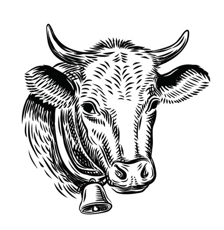 cow head: cow black head vector on white background