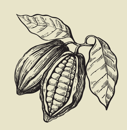 cocoa pod: vector black cacao beans on beige background