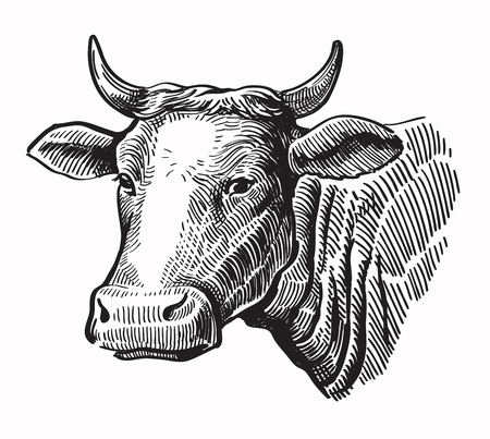 vector black hand drawn cow on white background Illustration