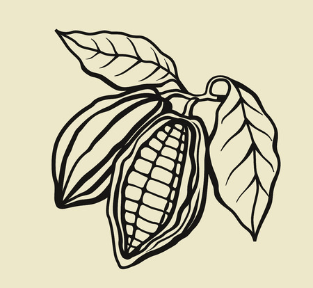 vector black cacao beans on beige background