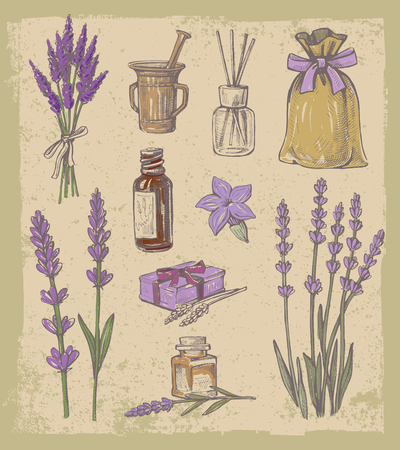 vector hand drawn lavender set on vintage background Illustration