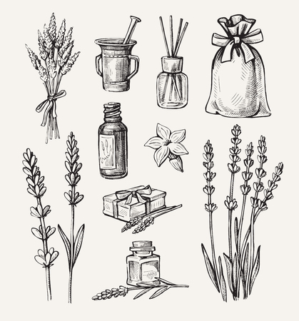 vector hand drawn lavender set on white background