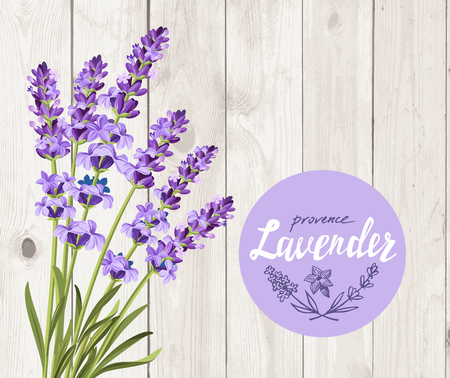 vector bunch of lavender on wood background