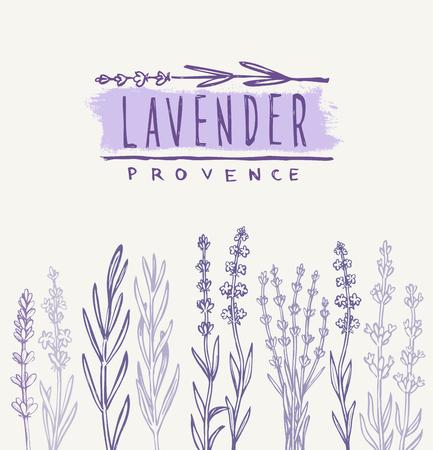 herbarium: vector hand drawn lavender set on white