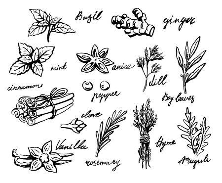 aromatic: set of spices and herbs vector illustration