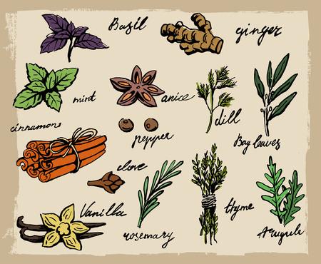 pepe nero: insieme di spezie ed erbe aromatiche illustrazione vettoriale