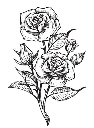 dibujos lineales: rosas vector de tatuaje con hojas sobre fondo blanco Vectores
