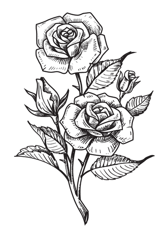 outline drawing: vector tattoo roses with leaves on white background Illustration