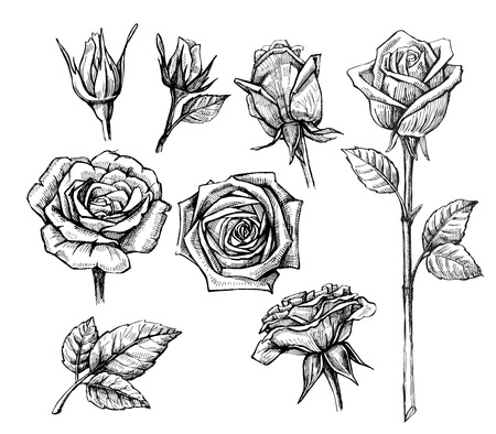 black ink: vector roses with leaves set on white background