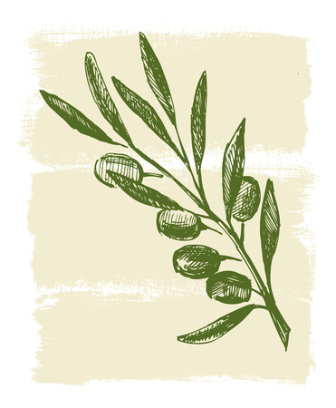 Hand drawn olive branch on paint background