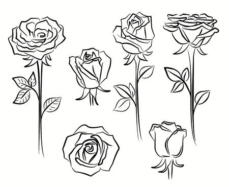 white roses: contour beautiful roses flower set on white