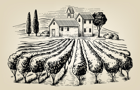 vineyards: vector hand drawn image of village and landscape Illustration