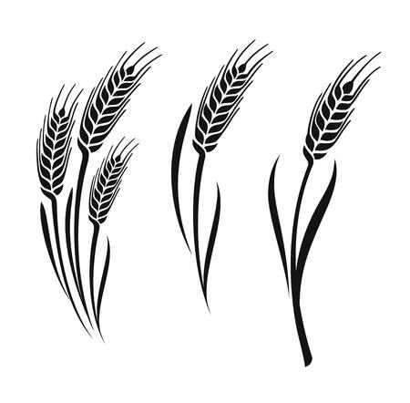 Kolekcja uszy wektor pszenicy na białym tle