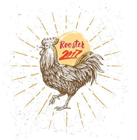 handmade drawing Rooster Illustration