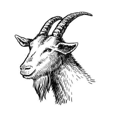 vector head of goat
