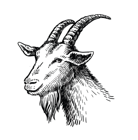 vector head of goat