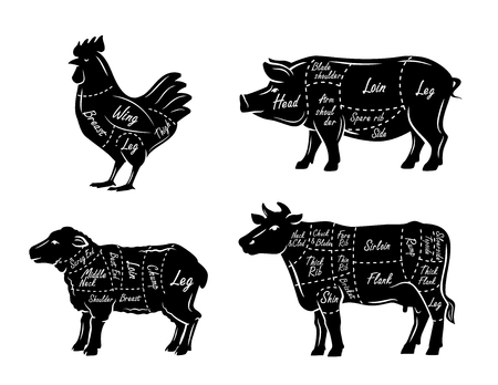 flank: butchers guide symbols vector illustration on white Stock Photo