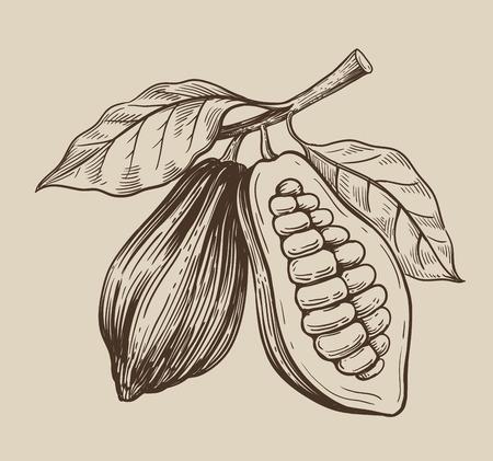 cocoa vector symbol vector illustration on beige