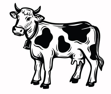 food: A vector illustration of cow Illustration