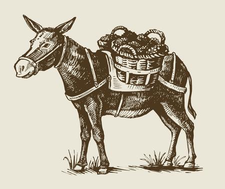 vector vintage hand getrokken illustratie van een ezel