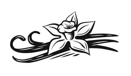 Vanilla flower vector Çizim