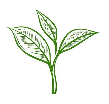 Foglie di tè. Disegnata illustrazione a base di erbe in stile schizzo