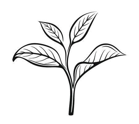 Vector tea leaves. Drawn herbal illustration in sketch style