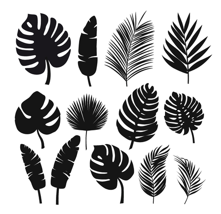 Set of black silhouettes of tropical leaves palms, trees. Illustration
