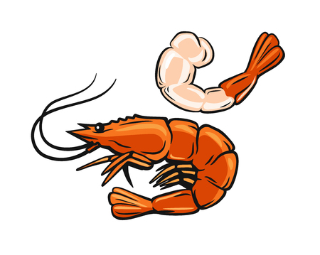 Prawn or Shrimp vector illustration.