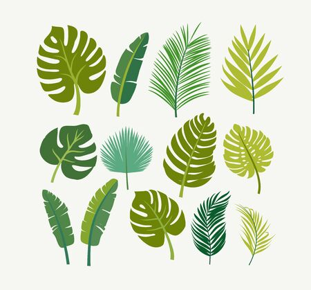 tropical leaves palms, trees Vector illustration. 일러스트