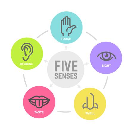 Conjunto de iconos de la ilustración de vector de cinco sentidos humanos