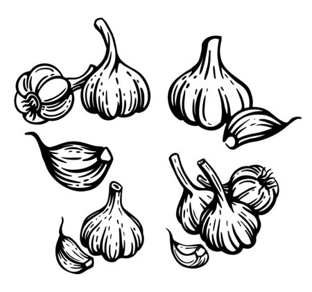 Garlic set. Hand drawn chopped garlic illustration. Stock Illustration - 128350427