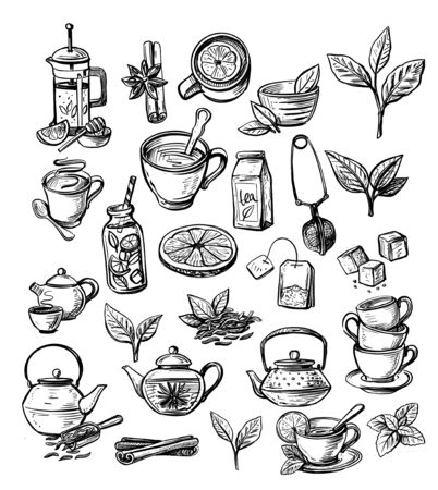 Vector collection of hand drawn tea