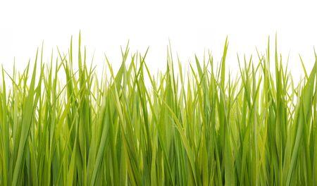 fresh green grass isolated on white Stock fotó
