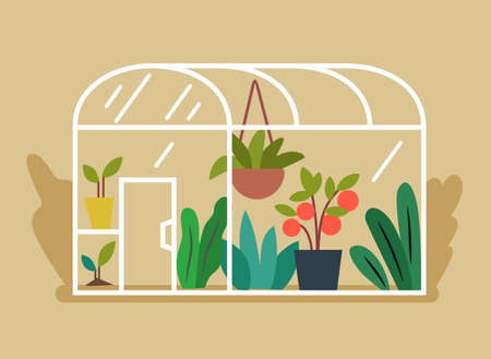 flat greenhouse with plants and vegetables inside Illustration
