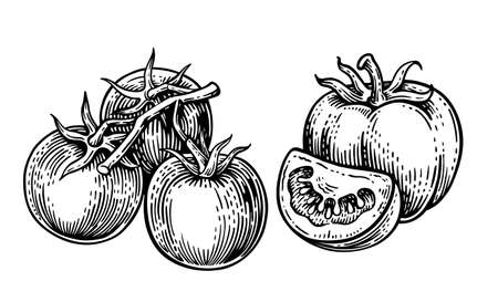 tomatoes on a white background in vintage