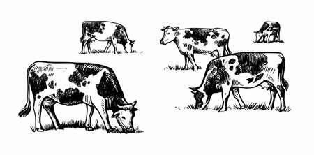 cows graze in meadow sketch style