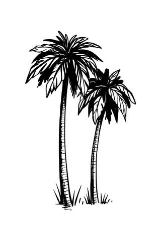 Tropical coconut palm trees. Black and white hand drawn vector.