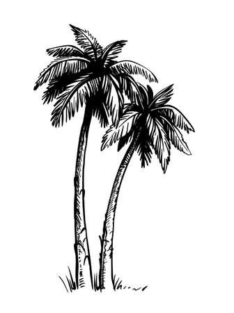 Tropical coconut palm trees. Black and white hand drawn vector. Vektorgrafik
