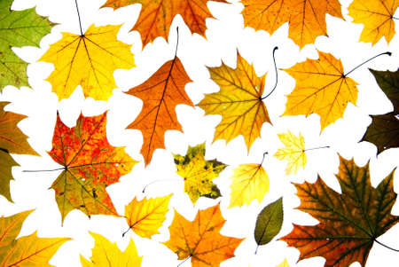 many autumn leaves background photo