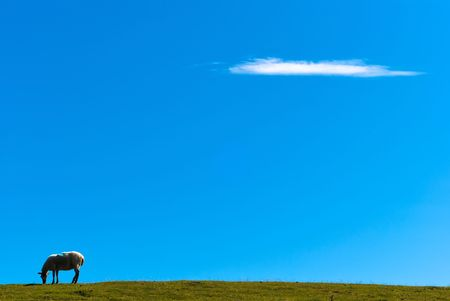 sheep is standing on a meadow in front of a blue sky Stock Photo - 8063587