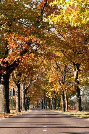colorful autumn avenue of trees on edge of road photo