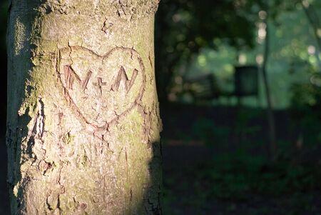 crush on: un coraz�n tallado en el �rbol  Foto de archivo